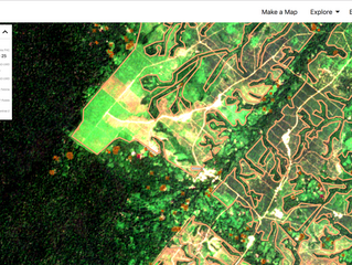 MapHubs Feronia: the first public plantation-level monitoring system in Africa