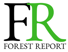 Introducing Forest Report: Deforestation intelligence for everyone