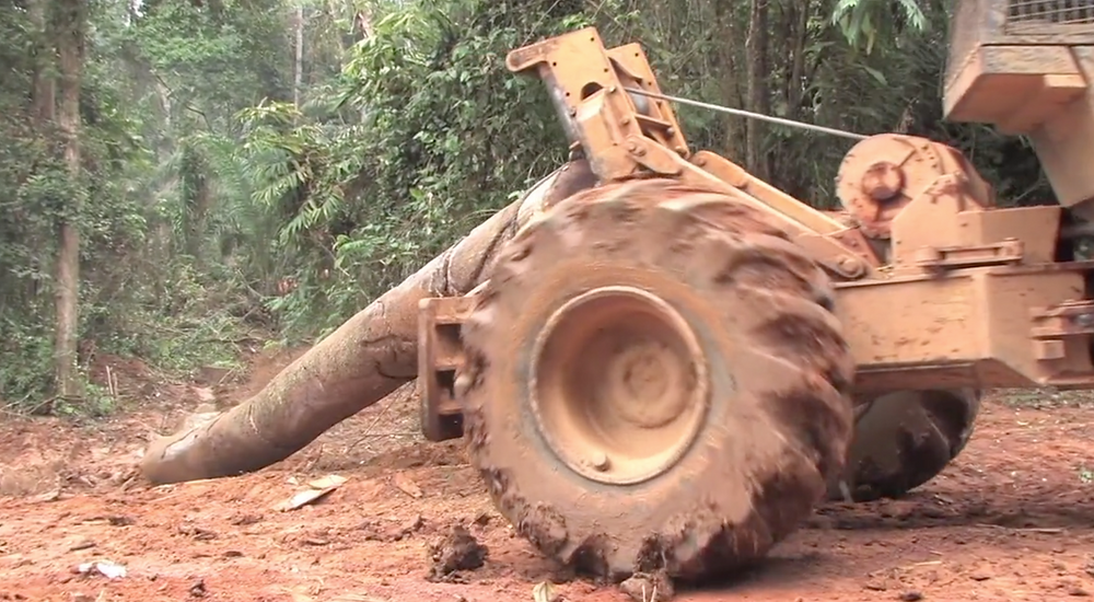 Bulldozing the rainforest