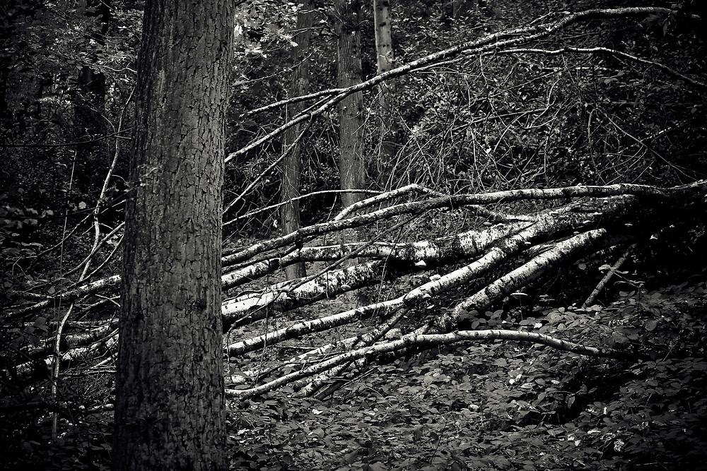 Woody Biomass-Dead Wood