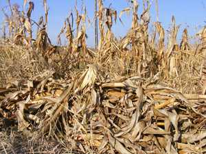 What is an Organic Feedstock?