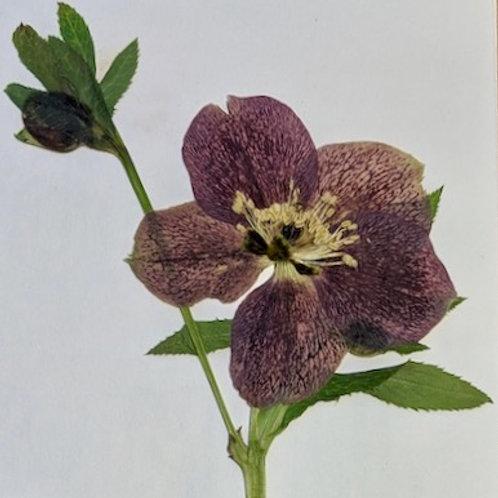 Arranging Flowers - A fresh bouquet & pressed flowers