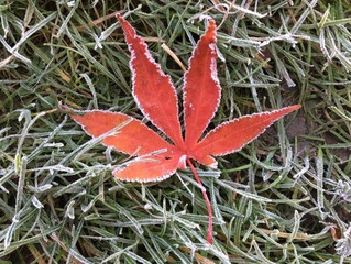 Crispy frost and last reds of autumn