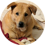 Lab Chow mix.png