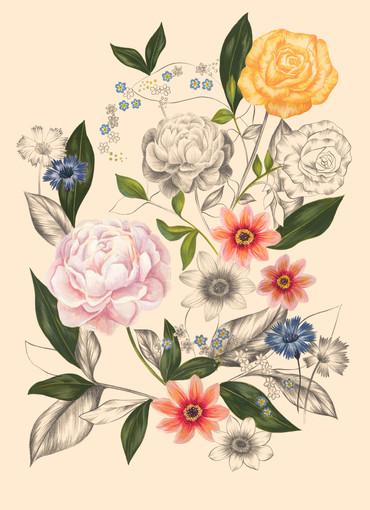 Summer Botanical Drawing