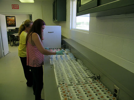 Lygus Research Pesticide Resistance