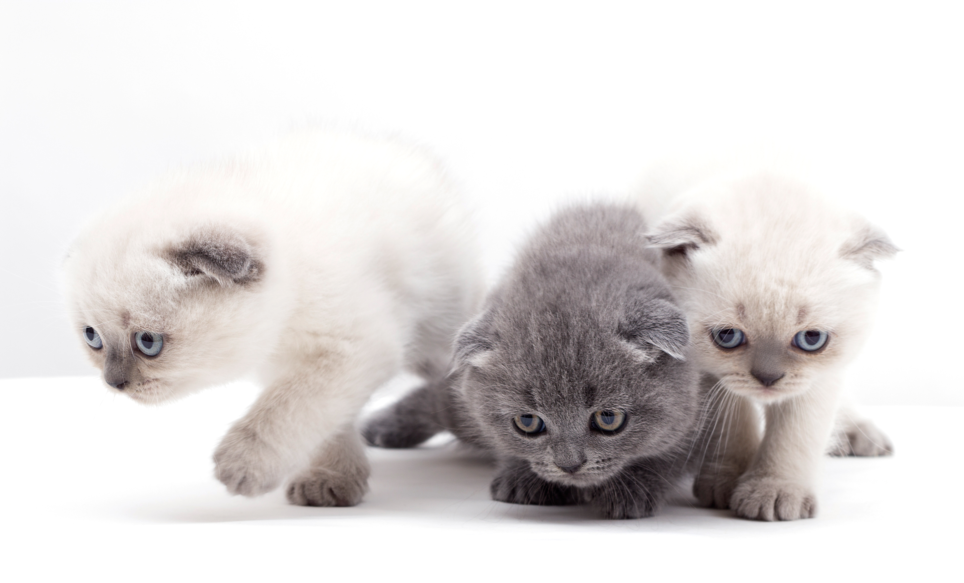 Three Cute Kittens