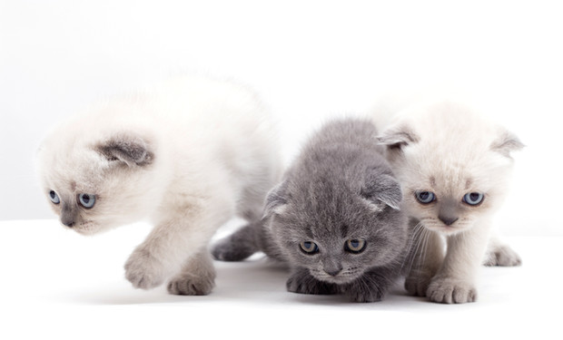 It's Cuddly Kitten Day: 'Purrfect!'