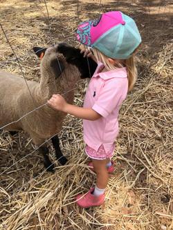 Activities on the farm 3
