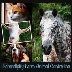 Serendipity Farm Animal Centre Inc.