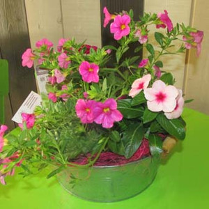 fleuriste-vie-de-fleur-Composition-de-plantes