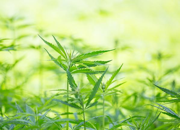 Cannabis Realtors - Home Warranty
