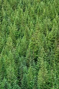 Forest web.jpg