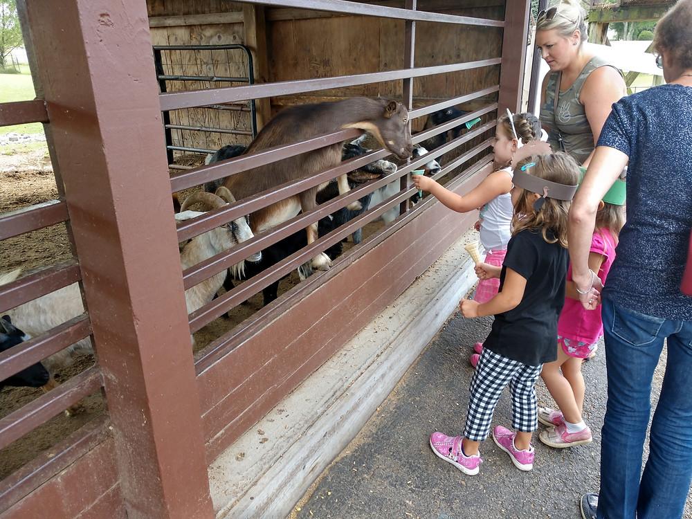 Students feeding animals together