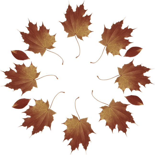 leafradial_edited_edited.png