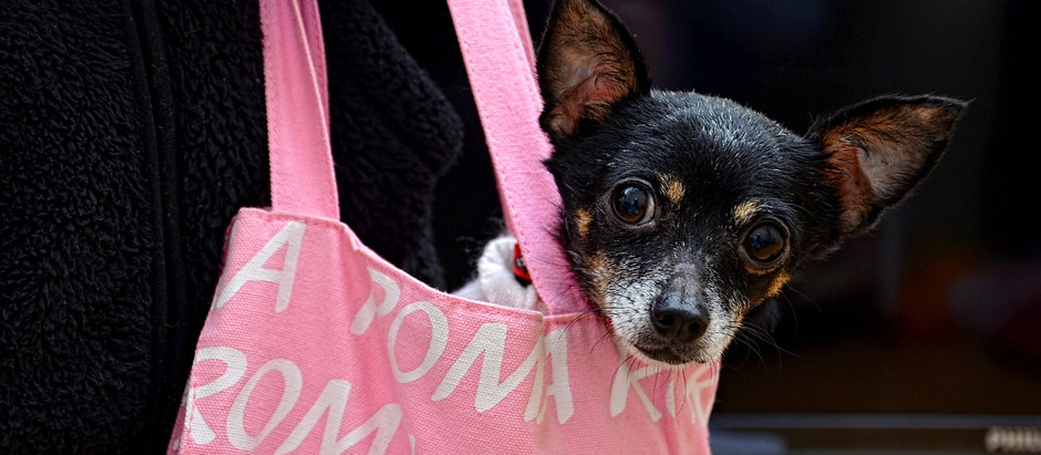 Chez le psy: Les doggy-bags