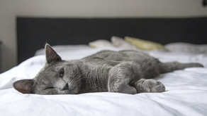 Elle dort avec son chat