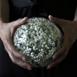 Karin_Schmuck_untitled_flowers_II