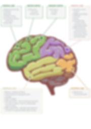 Brain_Infographic.jpg