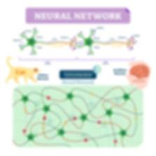 Neural Network_New_cat v human.jpg