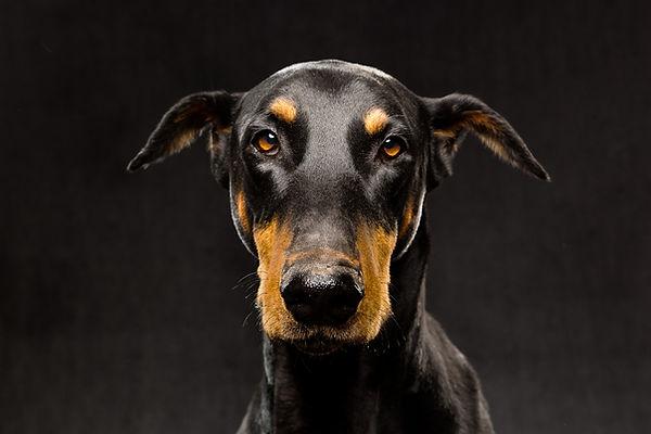 Dog  portrait dog picture in studio