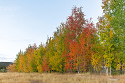 Fall Colors Heightened