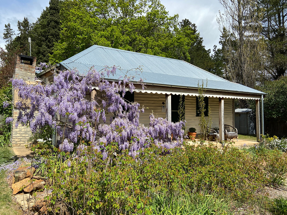 Oldbury Cottage Berrima with wisteria in full bloom in springtime