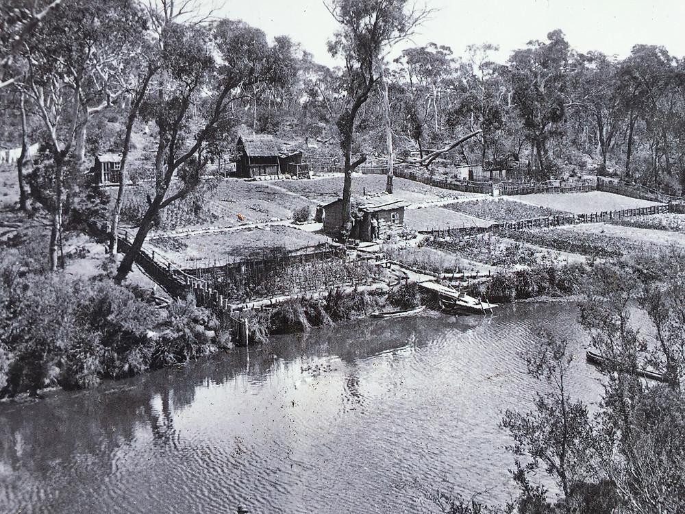 German Walk Vegetable Garden c.1916