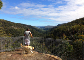 Great Walks Near Berrima: No.2 The Box Vale Walking Track
