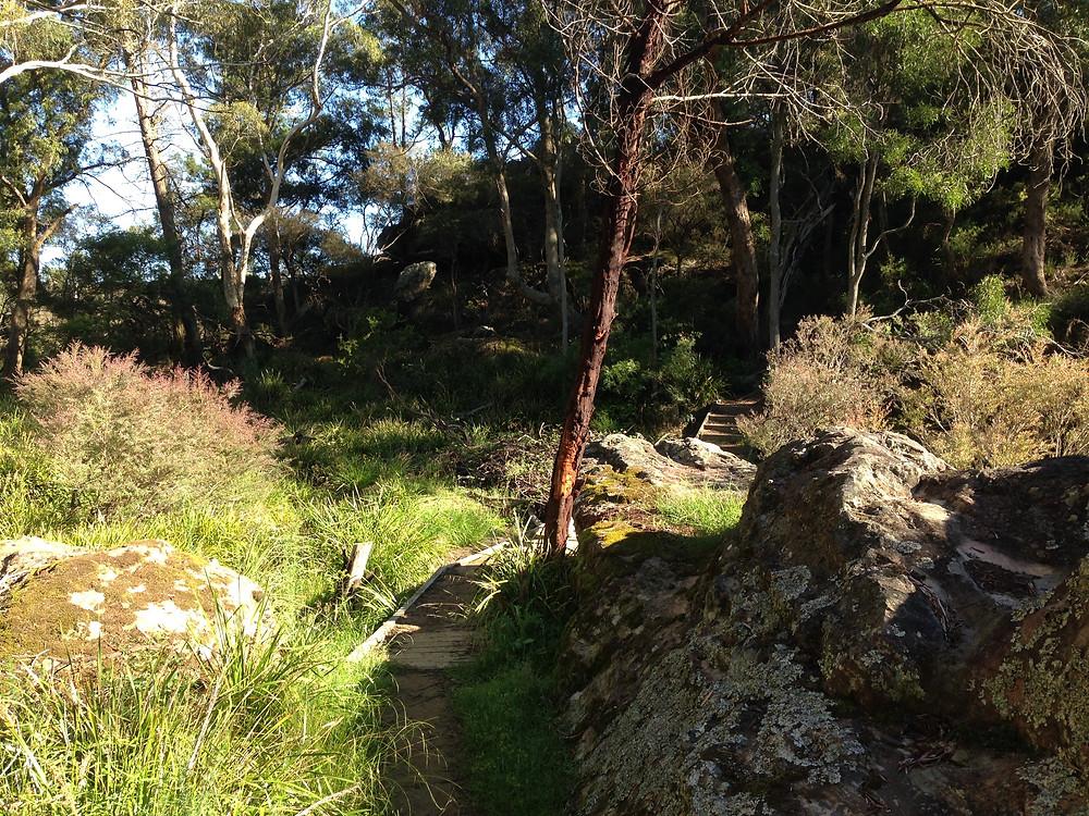 accommodation in Berrima- Box Vale Walking Track - Track Head