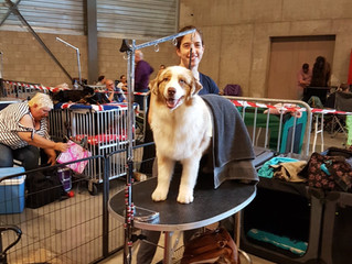 Int. Dogshow Belgium - Lovanium Trophy.