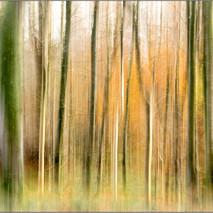 November Woodland