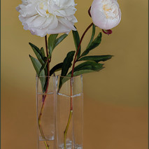 Peonies in  glass vases