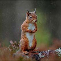 Rainy Day in Autumn.jpg