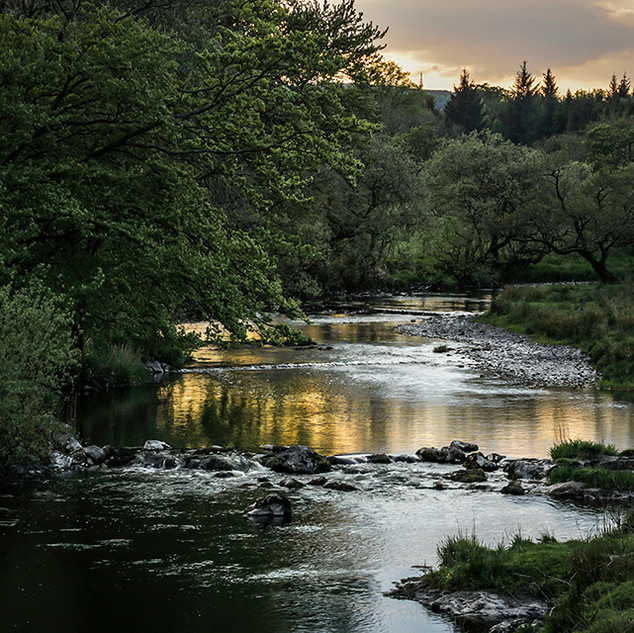 RIVER GRYFFE EVENING