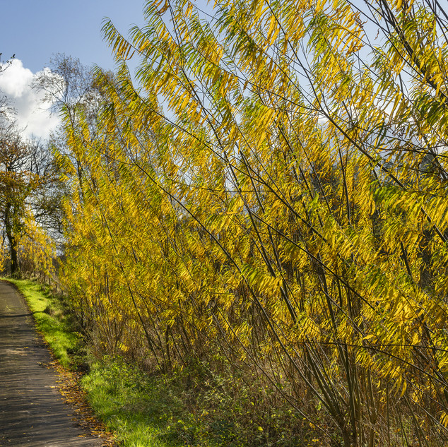 November - Road near Auchensale