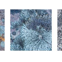 Lichens Triptych