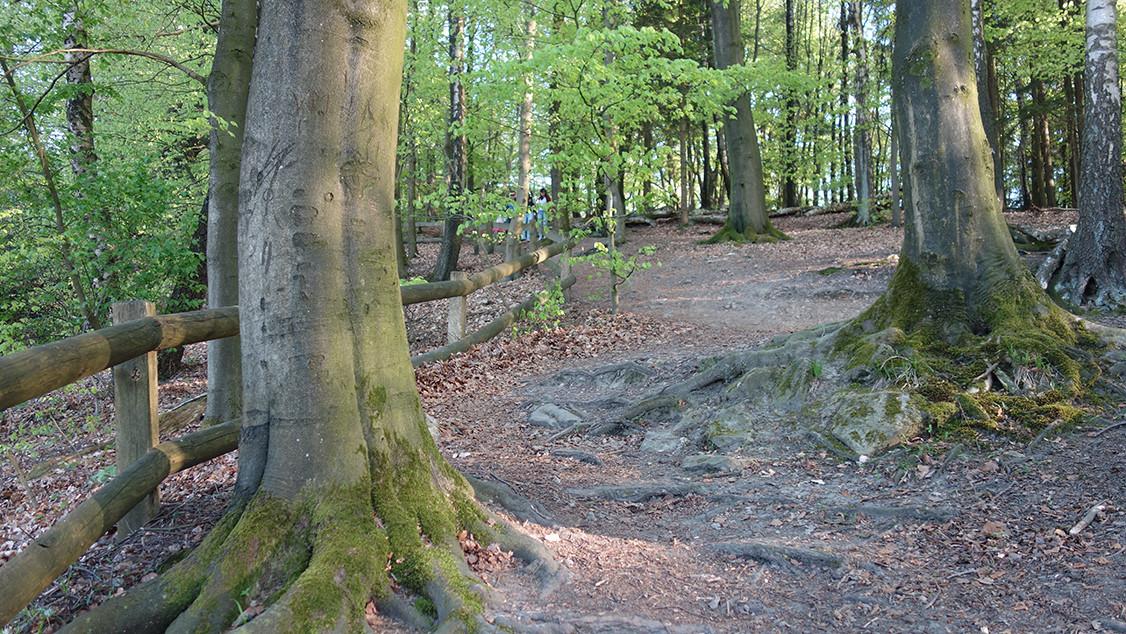 Wurzel Baum 03.jpg