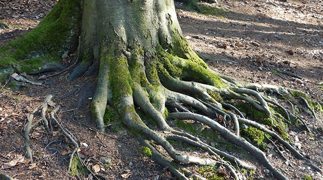 Wurzel Baum 01.jpg