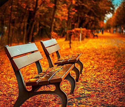 Herbst-1.jpg