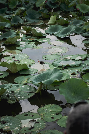 Kakadu-04733.jpg