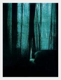 'Polaroid',  by Daniel Boudinet