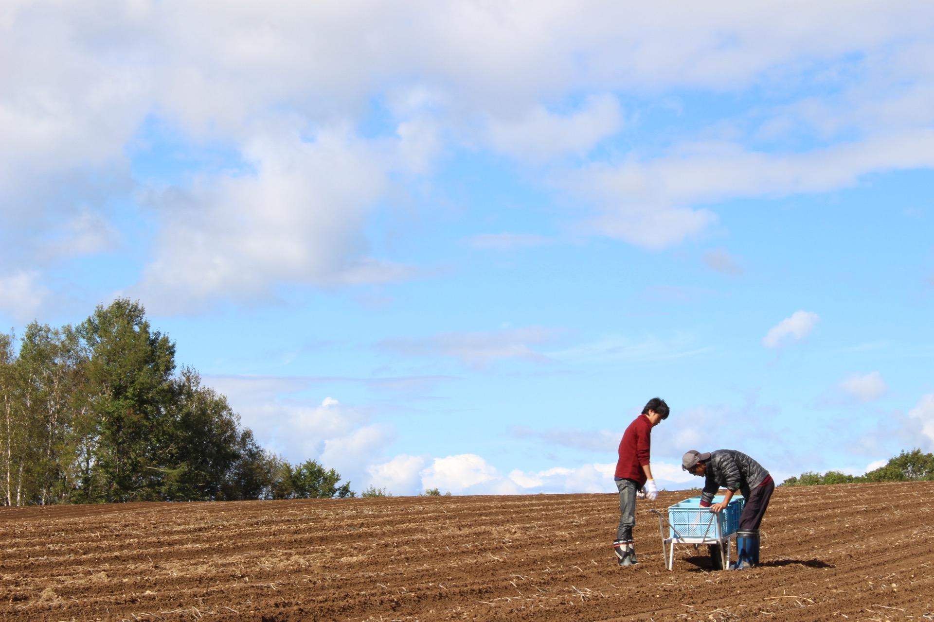 若山農園で畑仕事