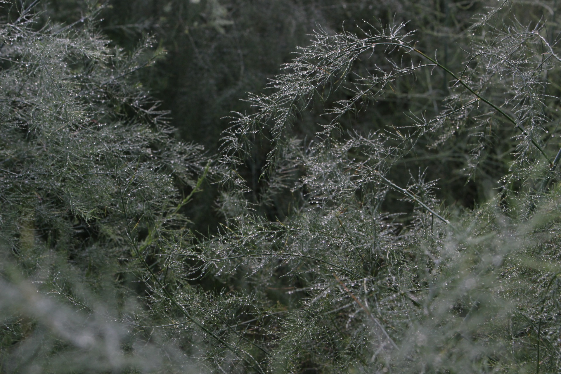 ニセコの自然