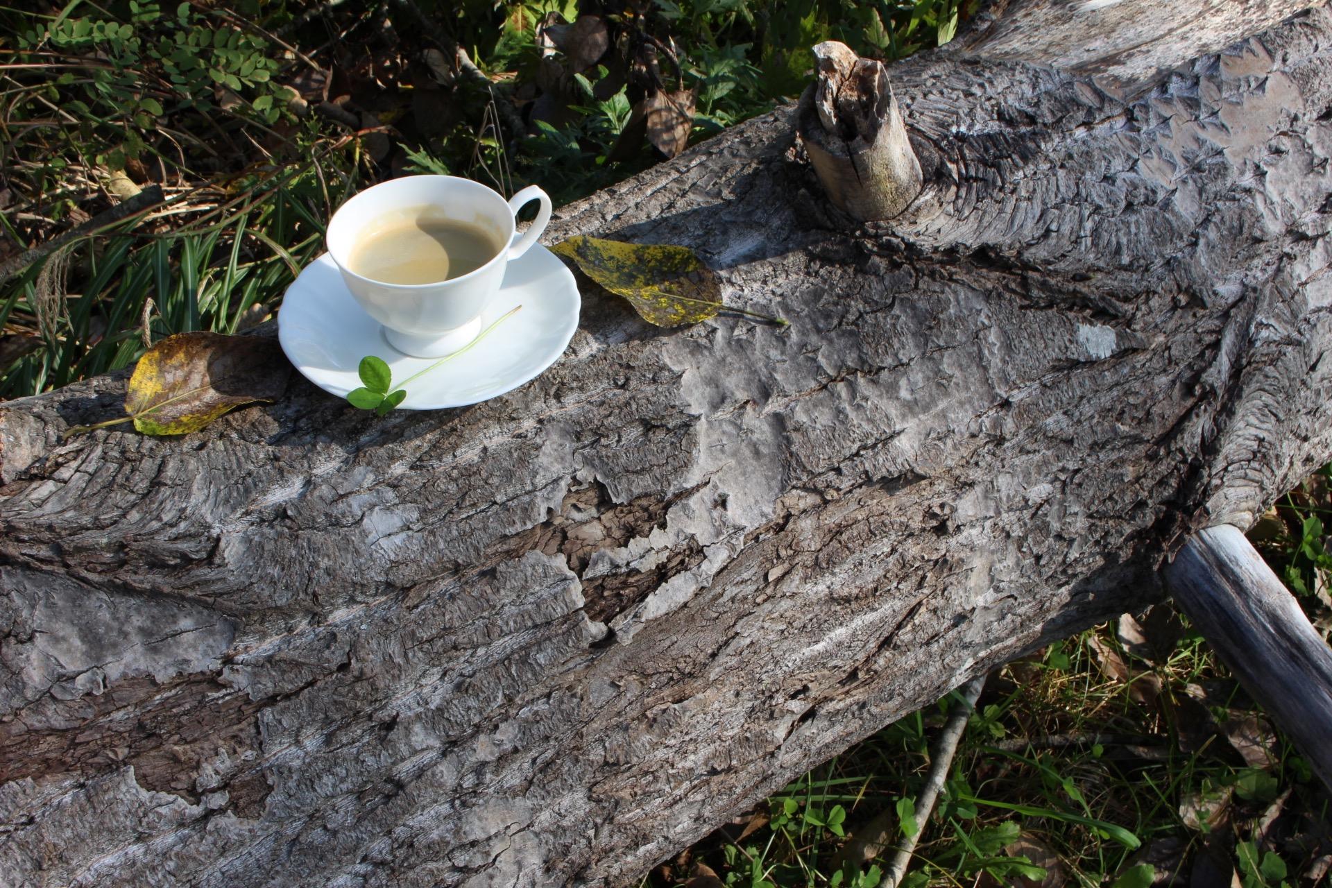 羊蹄山の湧き水で淹れた本格コーヒー