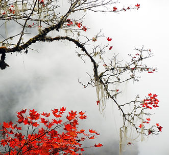 Autumn foggy day in the  snow mountains.
