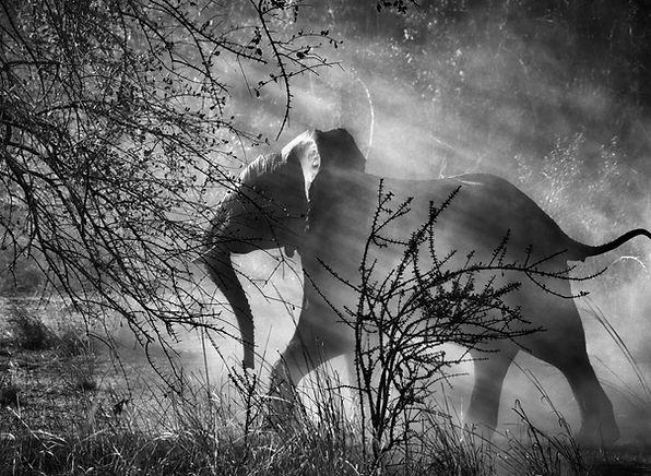 Sebastiao Salgado elefante genesi foto