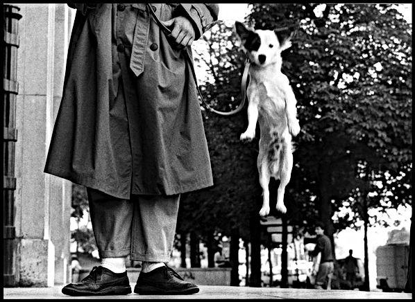 Elliot Erwitt fotografia cane