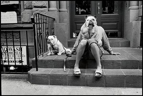 Elliot Erwitt fotografo cani 2