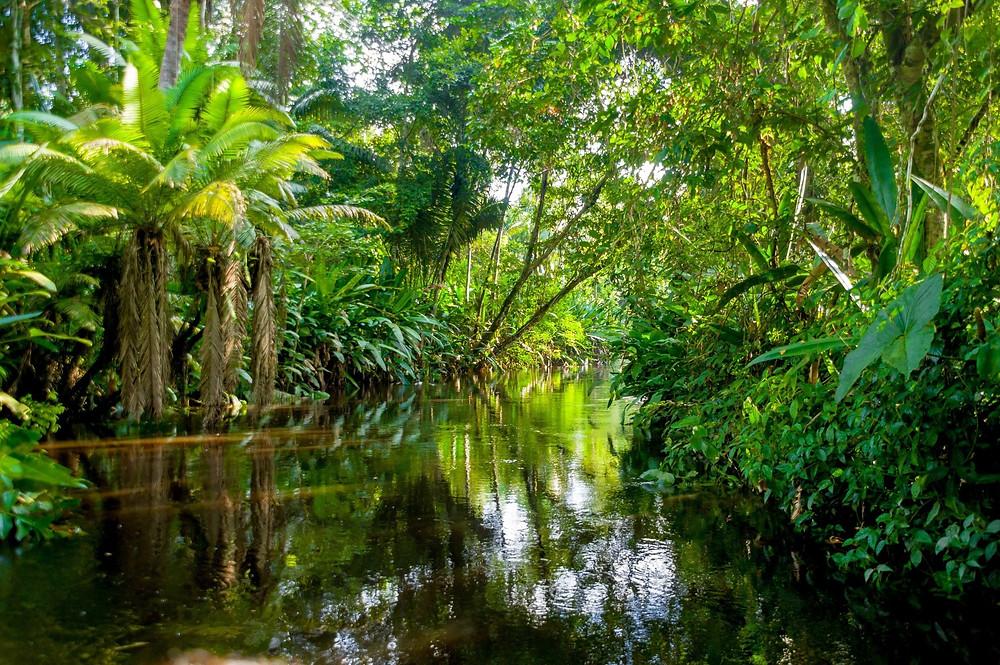Viaggio america latina amazzonia